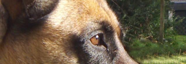 wie sehen die hunde