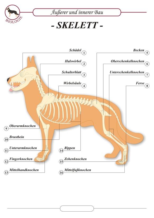 Anatomie - Dogland